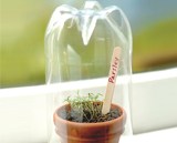 Mini greenhouse made from a 2-liter soda bottle