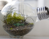 Creating a tiny terrarium in a light bulb
