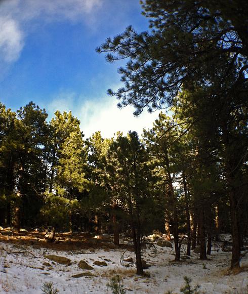 South Fork Shanahan Trail  - Boulder, CO